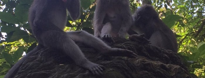 Sacred Monkey Forest Sanctuary is one of Go Ahead, Be A Tourist.
