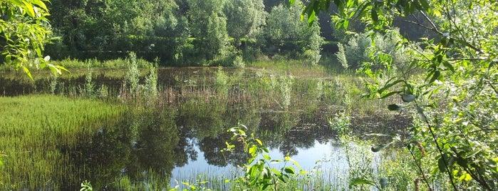 Золотой пруд is one of Olga : понравившиеся места.