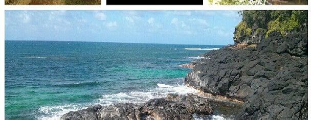 Turtle Cove is one of Lugares guardados de Bob.