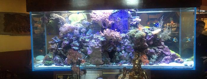 Tub Tim Thai & Sushi is one of home.