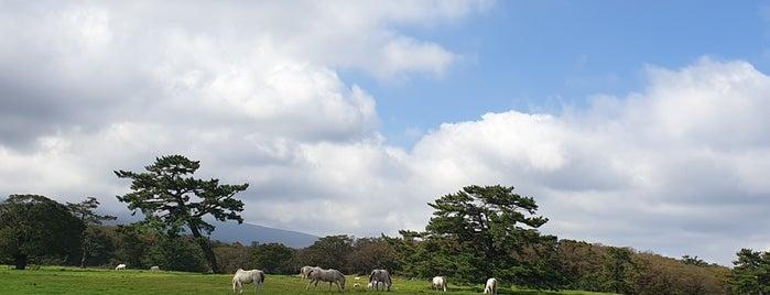 제주마방목지 is one of Jeju.