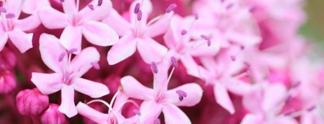 Akatsuka Botanic Garden is one of Posti che sono piaciuti a Tanaka.