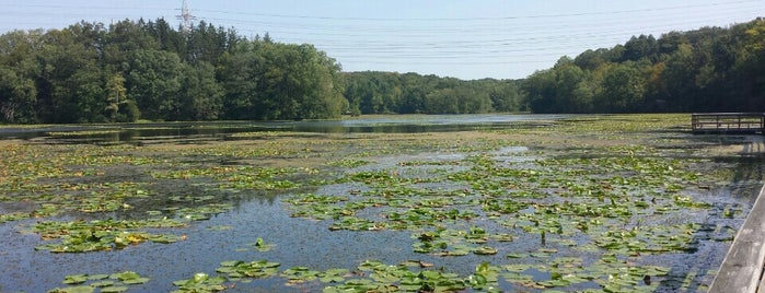 Teatown Lake Reservation is one of Ossining and Peekskill Places.