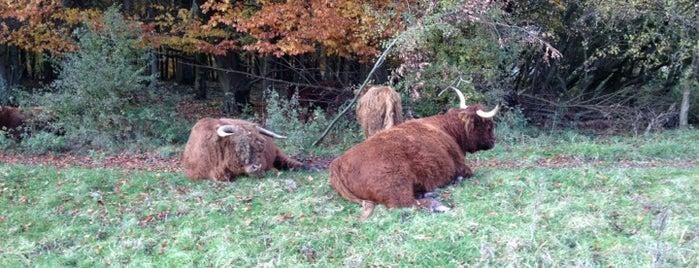Schotse Hooglanders is one of Lugares favoritos de Sorin.