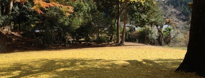 春日神社(土屋原) is one of 大和の風物詩 11月.