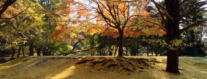 東大寺 東塔跡 is one of 大和の風物詩 11月.