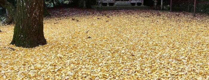 神明神社(太良路) is one of 大和の風物詩 11月.