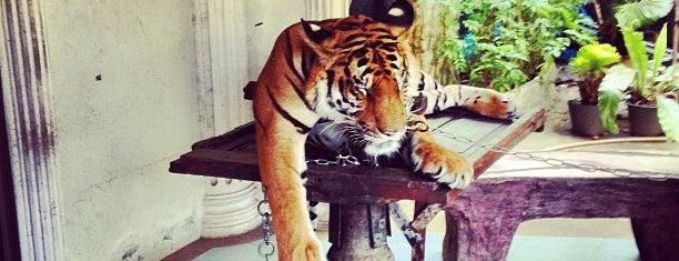 Phuket Zoo is one of Phuuu.