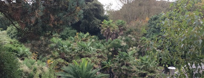 Ventnor Botanical Gardens is one of สถานที่ที่ Wayne ถูกใจ.