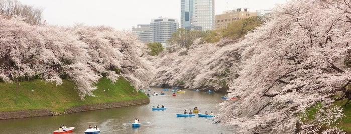Chidorigafuchi is one of Traveling Tokyo.
