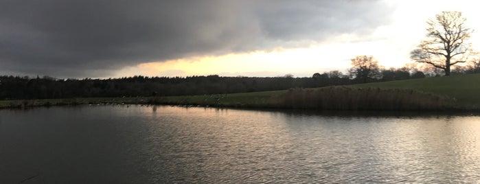 POLO FIELD | Coworth Park is one of Lieux qui ont plu à S.