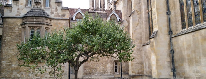 Newton's Apple Tree is one of Cambridge.