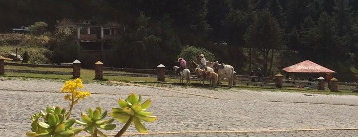 El Potrero is one of Posti che sono piaciuti a Marco.