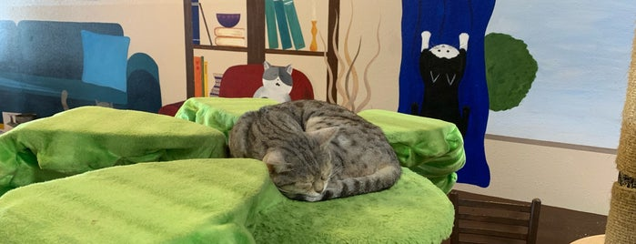 The Cat Cafe is one of San Diego to-do's.