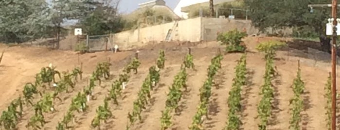 Fallbrook Winery is one of San Diego Wine Country.