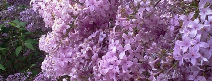 Lilac Festival is one of Cool places in NY (upstate).