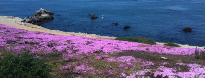 Pacific Grove Marine Gardens State Marine Conservation Area is one of HWY1: Santa Cruz to Monterey/Carmel.