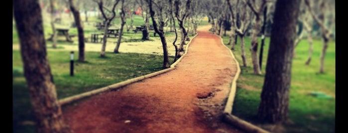 Recep Yazıcıoğlu Parkı is one of Lieux qui ont plu à İlker.