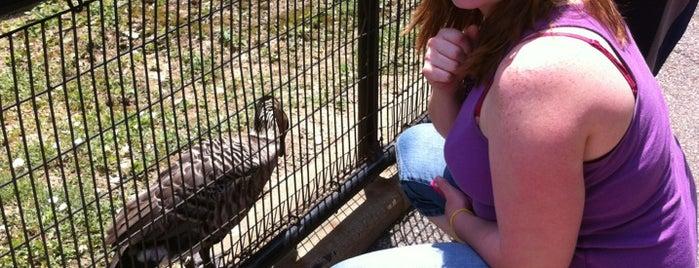 South Entrance St. Louis Zoo is one of Brkgny 님이 좋아한 장소.