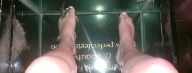 Perfect feet fish spa Bayswater is one of England To Do.