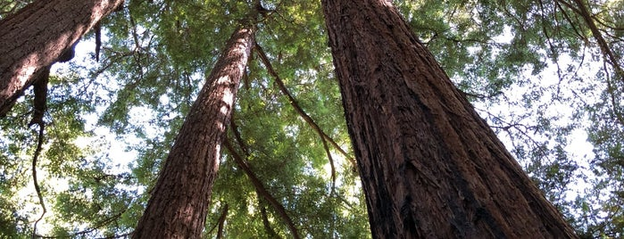 Henry Cowell Redwoods State Park is one of George's Liked Places.