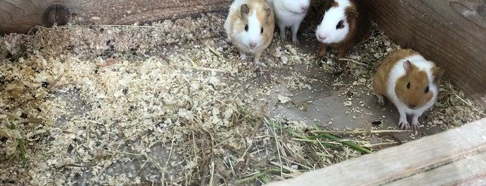 Guinea Pig Petting Zoo is one of Tempat yang Disukai Masahiro.