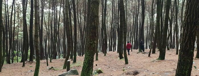 Taman Nasional Gunung Halimun Salak is one of Parker.
