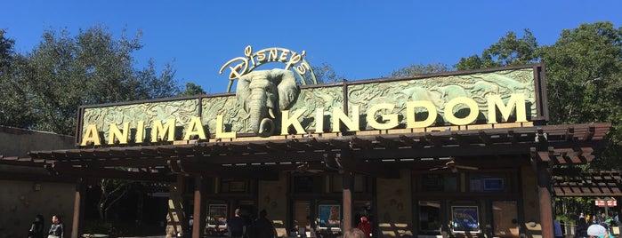 Disney's Animal Kingdom is one of Nicholas'ın Beğendiği Mekanlar.