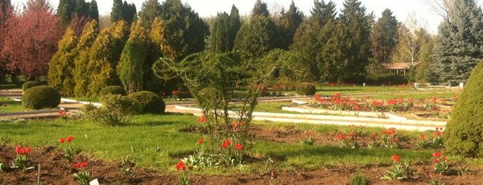 Ботанический Сад is one of MDA Chisinau.