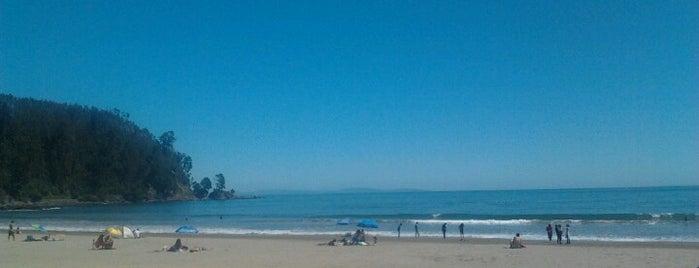 Playa Colcura is one of สถานที่ที่ Natalia ถูกใจ.