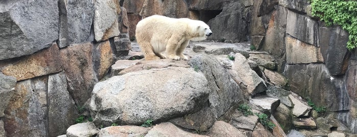 Eisbären | Zoo Berlin is one of Tempat yang Disukai Sevil.