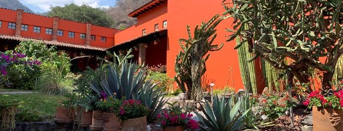 Museo Universitario Dr. Mario Schneider is one of สถานที่ที่ David ถูกใจ.