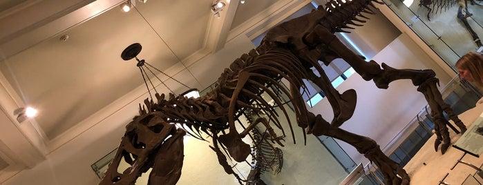 アメリカ自然史博物館 is one of Paolaさんのお気に入りスポット.