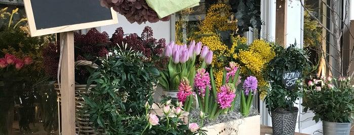 Flores Bucaro is one of Tempat yang Disukai Paola.