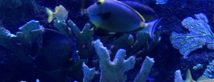 Antalya Aquarium is one of Orte, die Ziya Tuna gefallen.