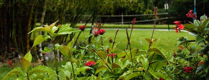 Lynn University Butterfly Garden is one of Lynn Campus.