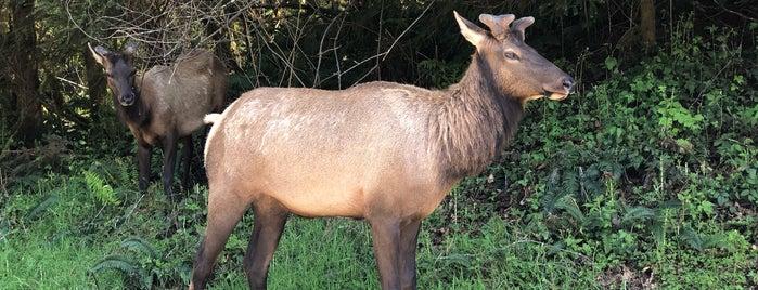 Elk Meadow is one of Pacific Northwest.