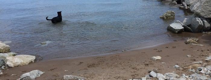 Evanston Dog Beach is one of Orte, die Marco gefallen.