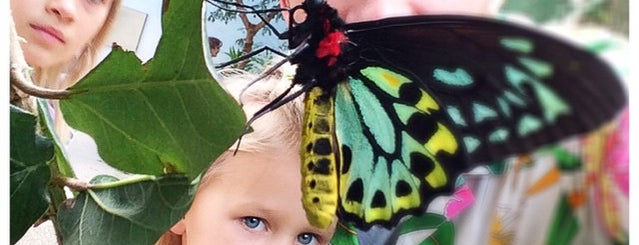 Peggy Notebaert Nature Museum is one of The Best Ways to Feel Like a Kid Again in Chicago.