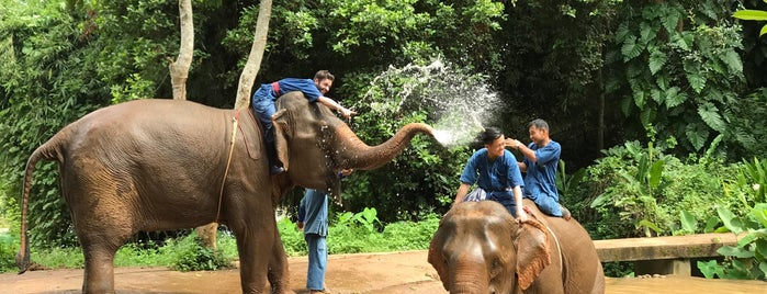 Elephant Camp at Four Seasons Tented Camp, Golden Triangle, Thailand is one of Tailandia.