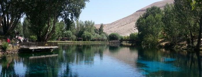 Gürün Gökpınar Gölü Doğal Yaşam Parkı is one of Mekanlar.