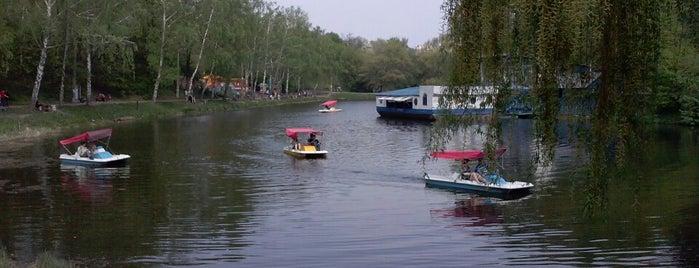 Озера в парку «Нивки» is one of Locais curtidos por Валентина.