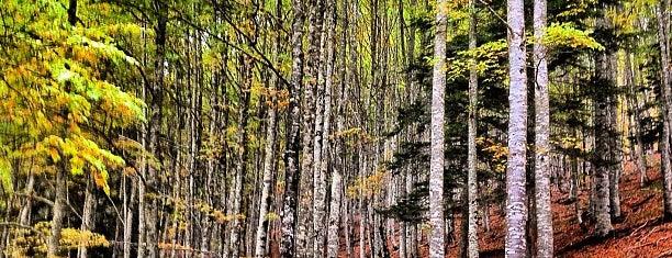 Selva de Irati is one of Reyno de Navarra, Tierra de Diversidad.