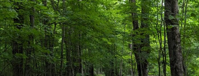 Diamond Notch Trail is one of Catskills.