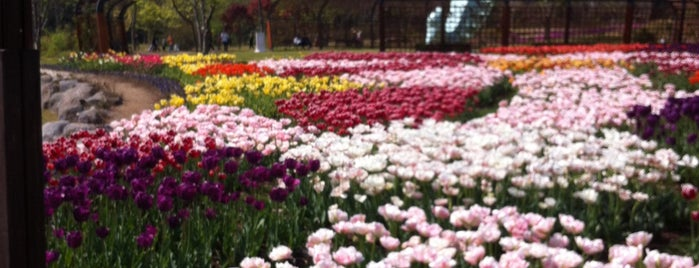 Suncheon Bay Garden Expo is one of my korea.