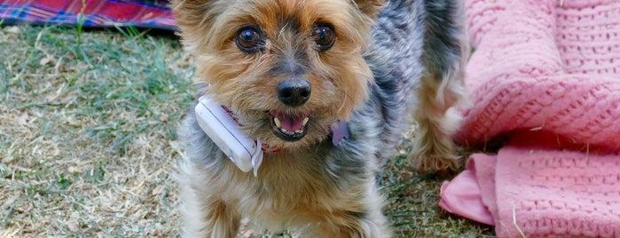 Celia Hammond Animal Trust is one of สถานที่ที่ Paul ถูกใจ.
