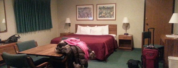 Econo Lodge is one of service dog friendly travel!.