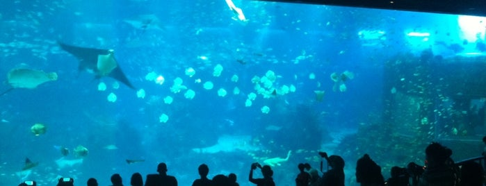 S.E.A. Aquarium is one of Guide to Singapore's best spots.