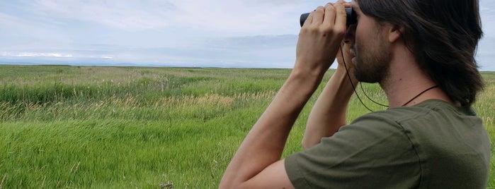 George C. Reifel Migratory Bird Sanctuary is one of Vancouver/Seattle.