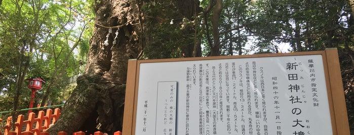 新田神社 大樟 is one of 鹿児島探検隊.